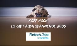 Anzeige für Fintech Jobs
